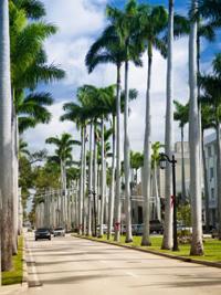 palms[1]